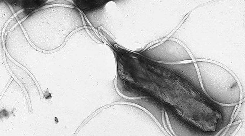 Лечение хеликобактер пилори прополисом